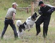 Профессиональная дрессировка собак.Занятия по Охране и Защите.