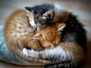 Безплатно! Красивые котята в хорошие руки.