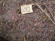 продам калифорнийского червя  ,  Биогумус