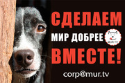 Животным помощь,  поддержка информационнаая